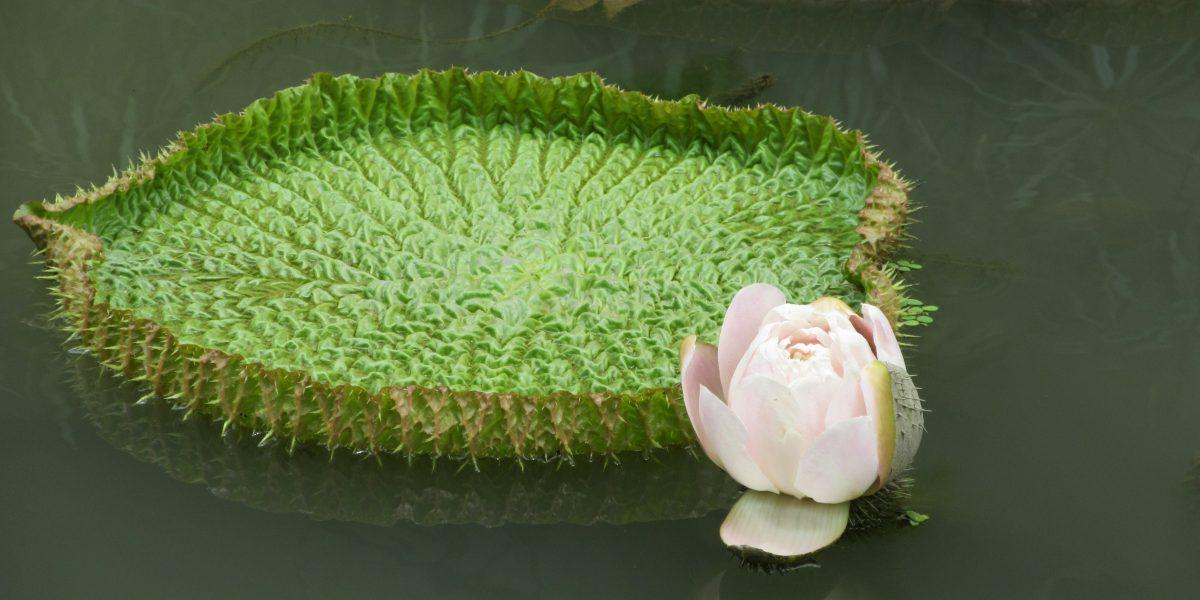 Inner journey lotus pinterjuco