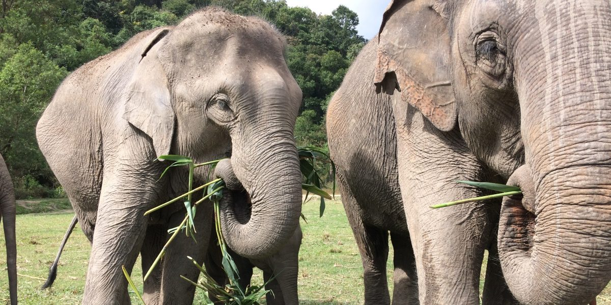 Yammy - elephants eating a lot - pinterjuco.hu