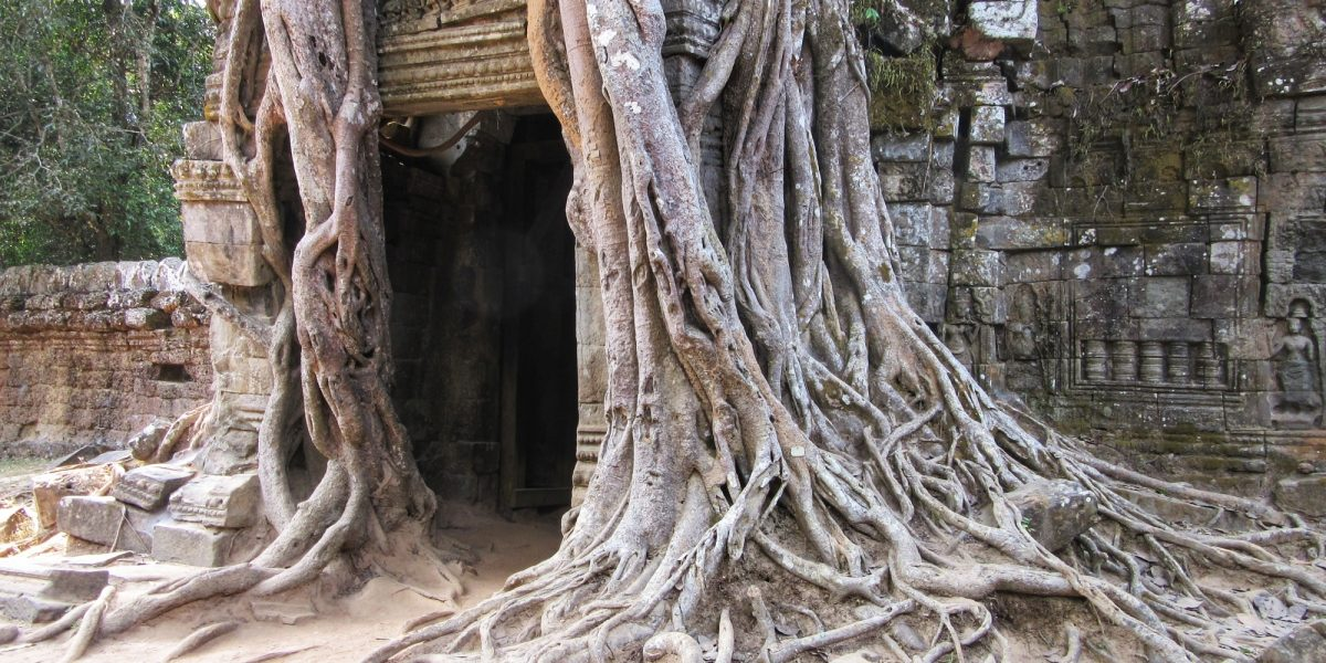 Ta Som tree at the eastern gopura - pinterjuco.hu