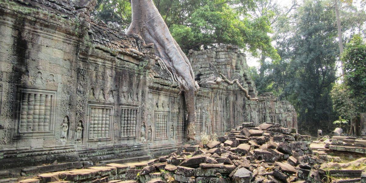 Tree at Preah Khan #2 - pinterjuco.hu